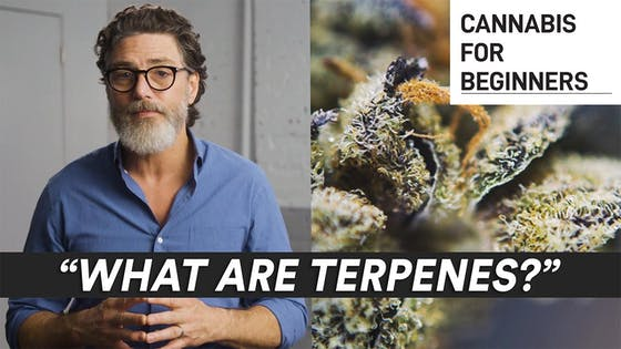 Cannabis for Beginners: What Are Terpenes?